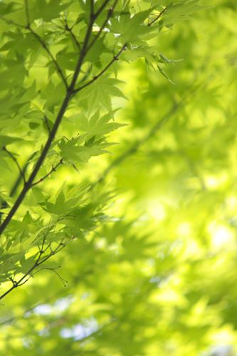 深緑という言葉もありますな。