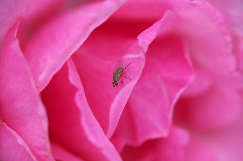 牡丹と薔薇なんて昼ドラがありました・・・